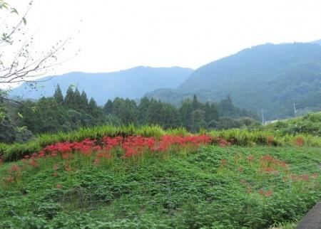 江里田の彼岸花と滝 2019-09-26 003
