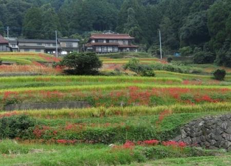 江里田の彼岸花と滝 2019-09-26 036