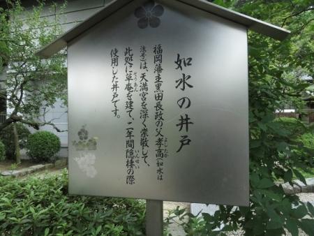 露草 2019-08-30 039
