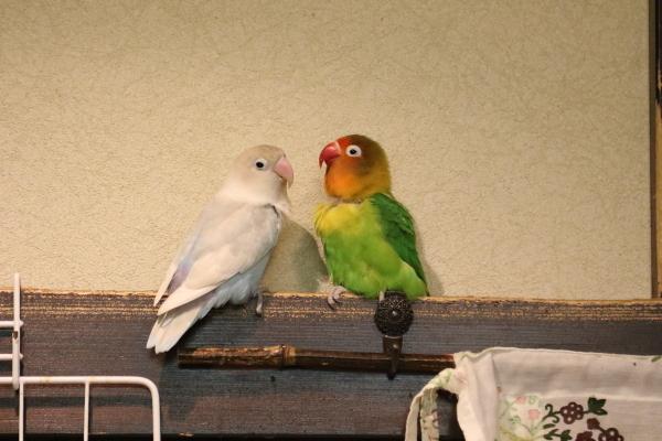 ニコ&チュピ2