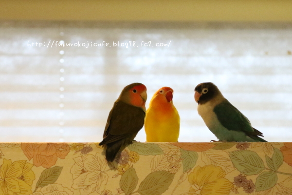 リトル、ミル&サリイ2