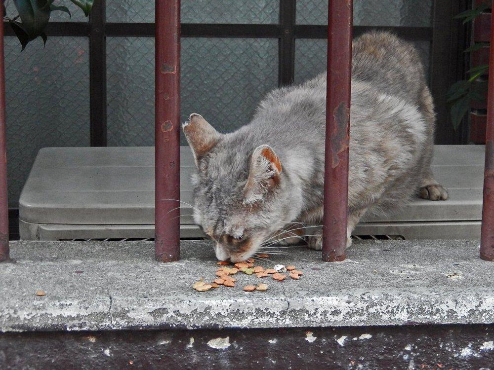 キャットフードをもらった地域猫
