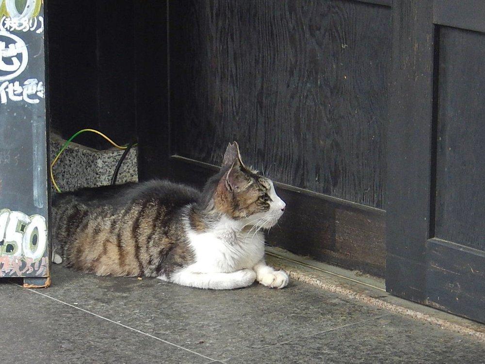 戸の前の縞猫