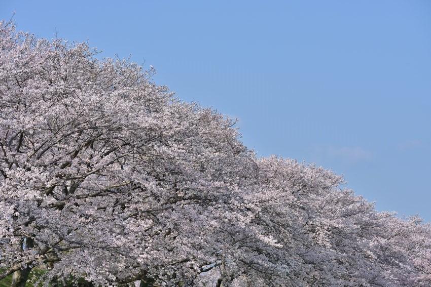 _20200404_101542_fujiwara (6)