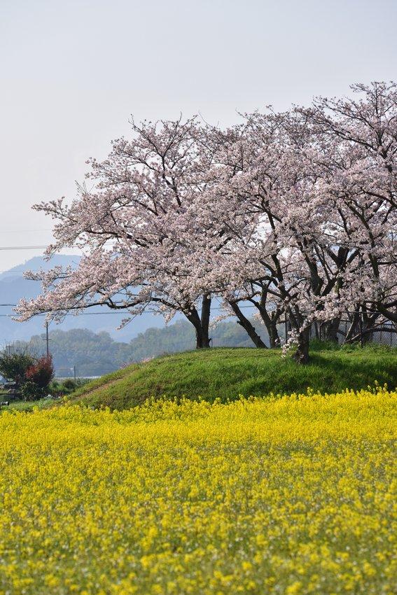 _20200404_101542_fujiwara (7)