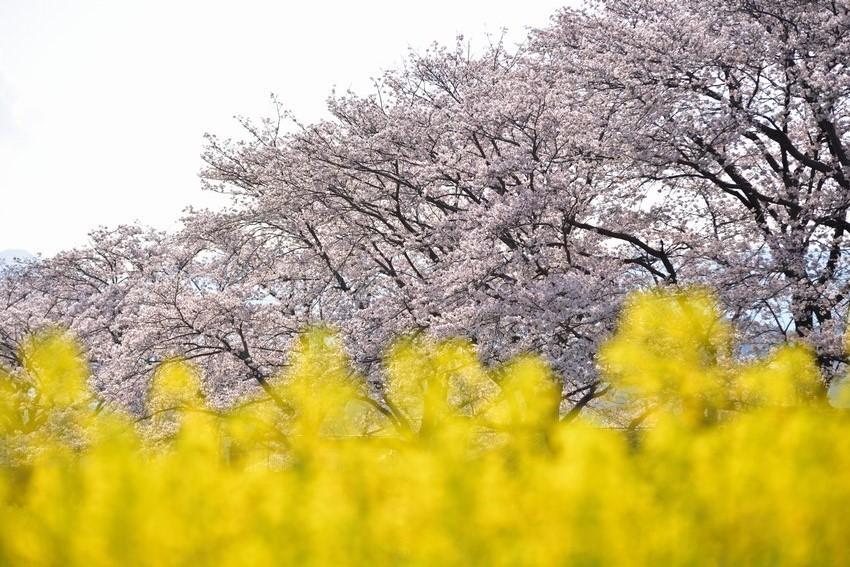 _20200404_101542_fujiwara (8)