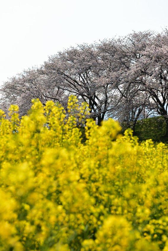 _20200404_101542_fujiwara (15)
