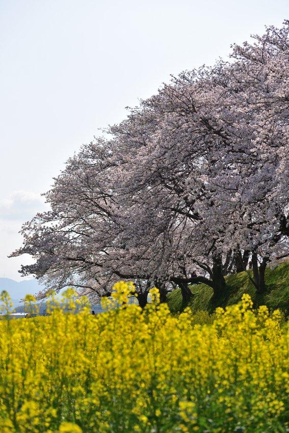 _20200404_101542_fujiwara (17)