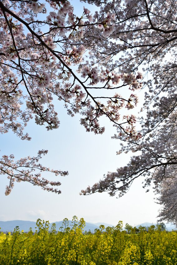 _20200404_101542_fujiwara (19)