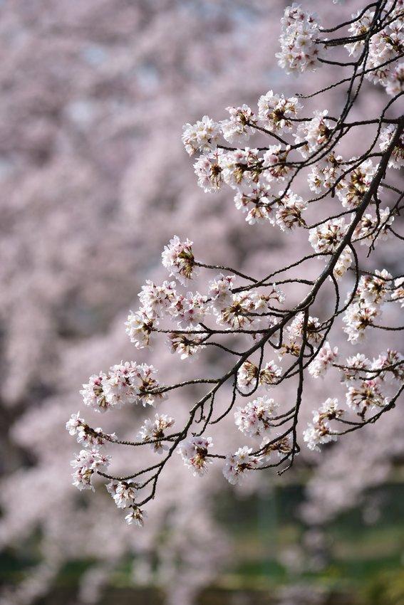 _20200404_101542_fujiwara (49)
