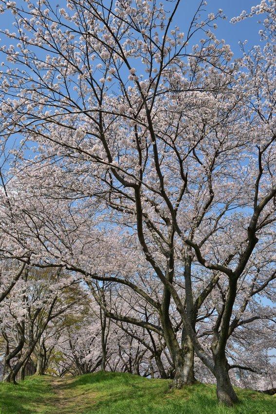 _20200404_101542_fujiwara (60)