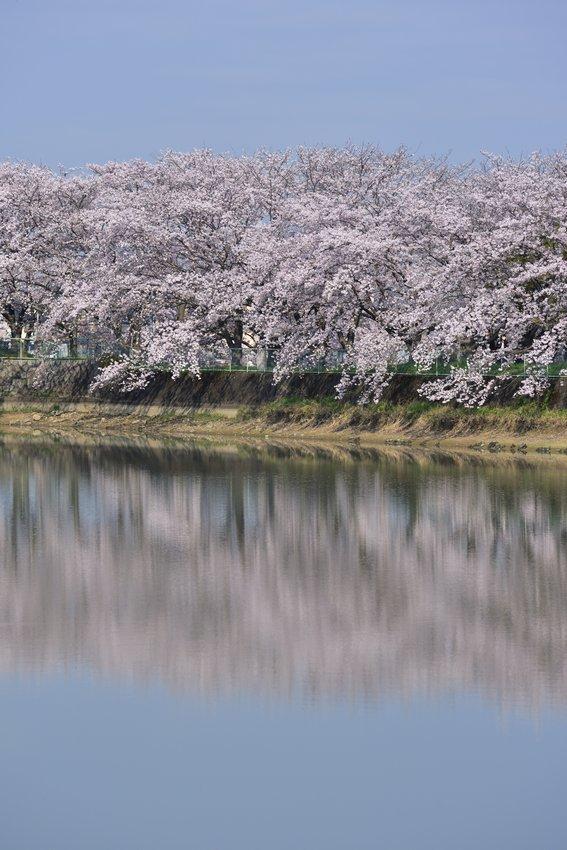 _20200404_101542_fujiwara (61)