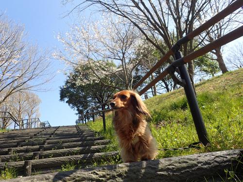 satosaku4.jpg