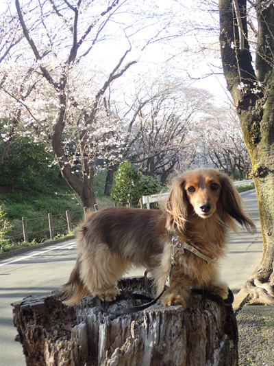 yamato11.jpg