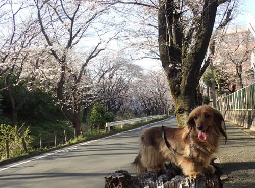yamato14.jpg