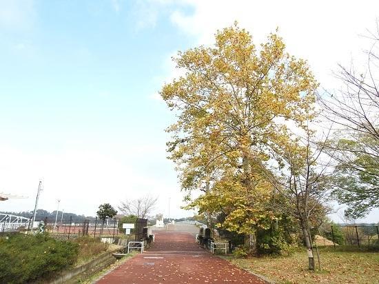 DSCN0528.jpg