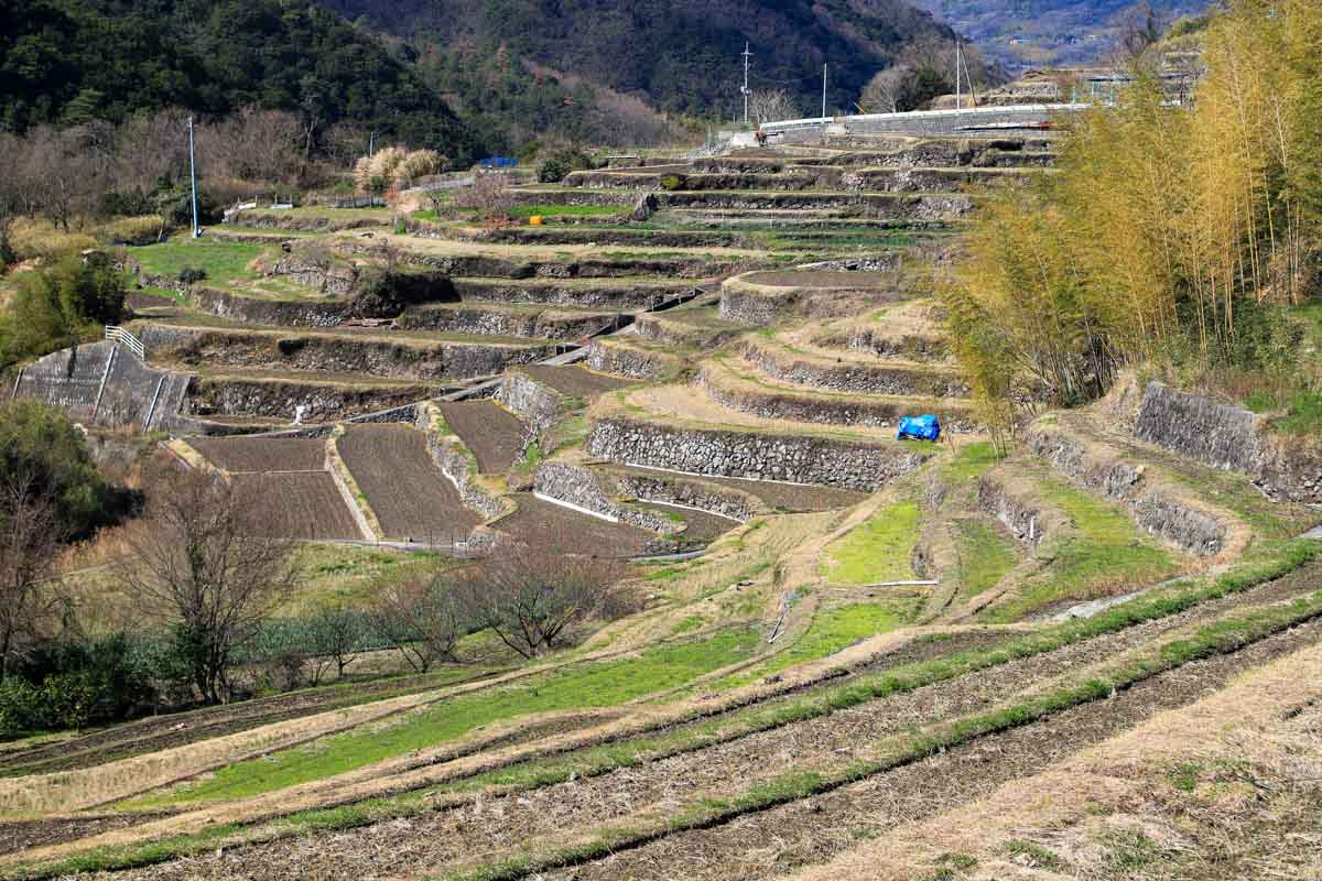syodoshimax-1.jpg