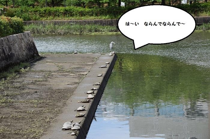 DSC_018020200509大川