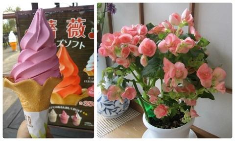 令和元年10月11日くじゅう花公園2