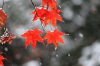 2019雪と紅葉2