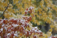 2019雪と紅葉3