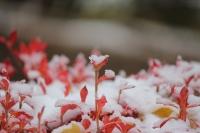 2019雪と紅葉5