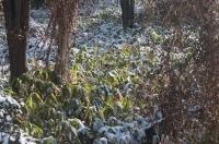 雪解け2020-7