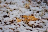 雪解け2020-8