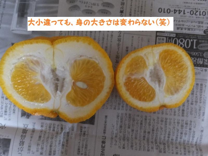 DSCF2102_1_2020041809071002e.jpg