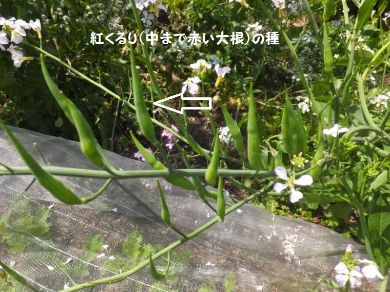 DSCF2439_1_202004261132318f0.jpg