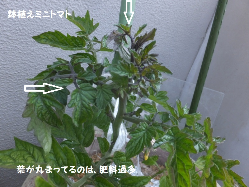 DSCF2577_1_20200501081312155.jpg