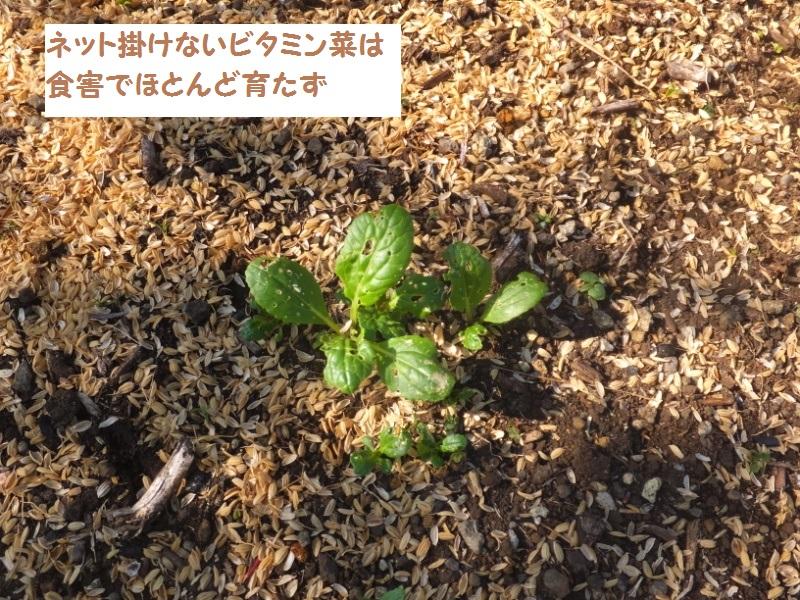 DSCF2587_1.jpg