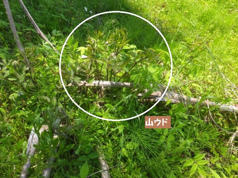 DSCF2620_1_20200430153846b52.jpg