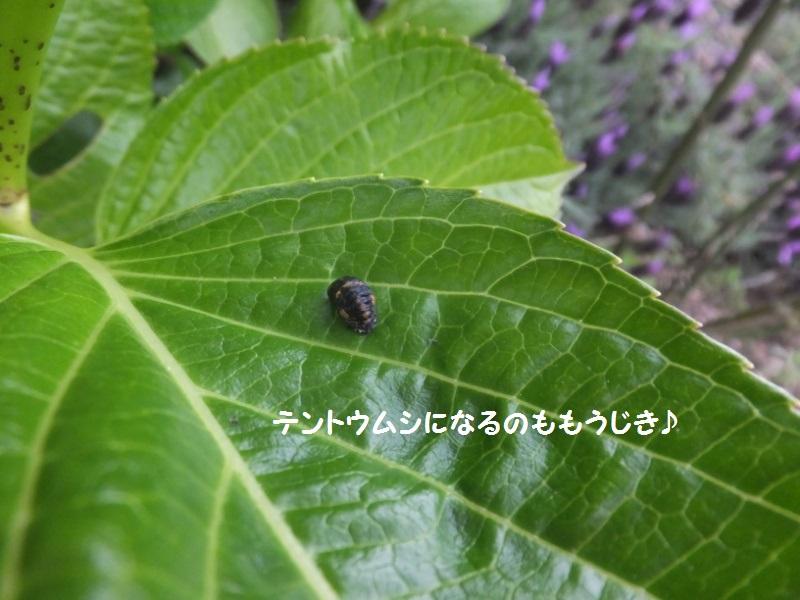 DSCF2638_1_20200502110118624.jpg