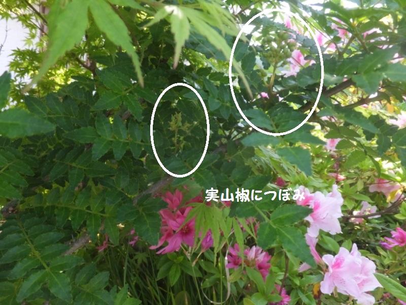 DSCF2697_1_20200503153712e63.jpg