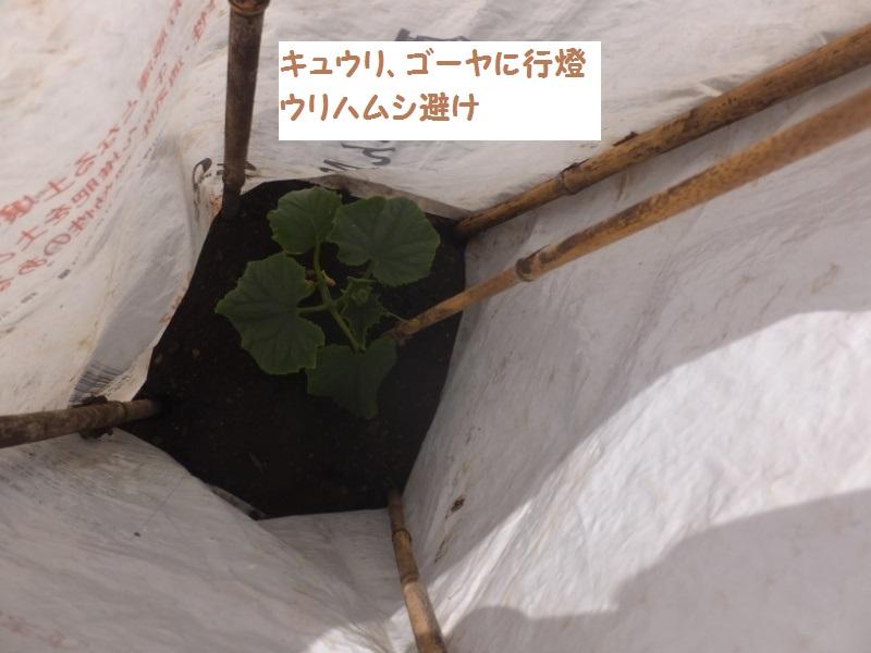DSCF2790_1.jpg