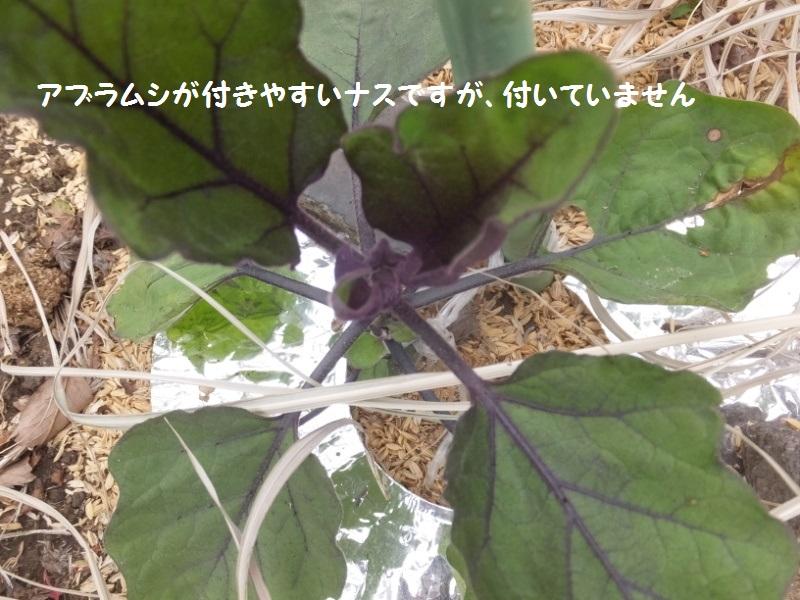 DSCF2944_1_20200509104241a1d.jpg