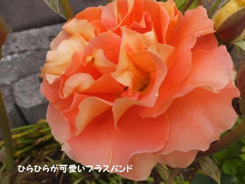 DSCF2946_1_20200509104251ee4.jpg