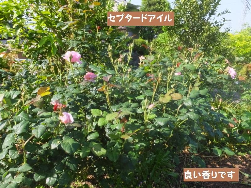 DSCF3115_1_20200514085004c9e.jpg