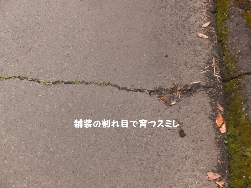 DSCF3208_1.jpg