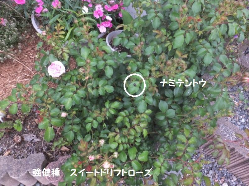 DSCF3269_1_20200519081431f4a.jpg