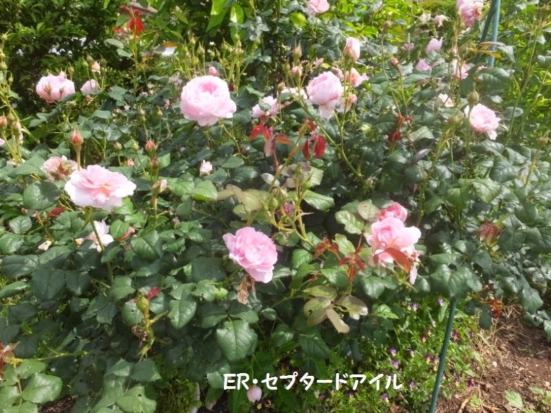 DSCF3401_1.jpg