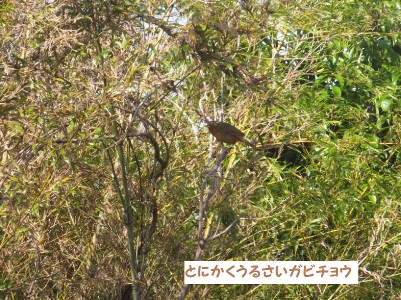 DSCF3409_1.jpg