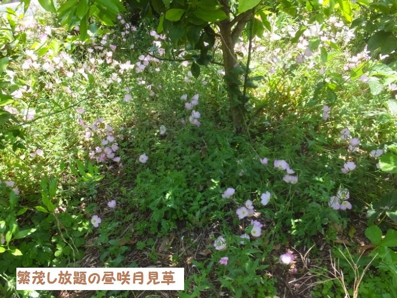 DSCF3440_1_20200525093816d80.jpg