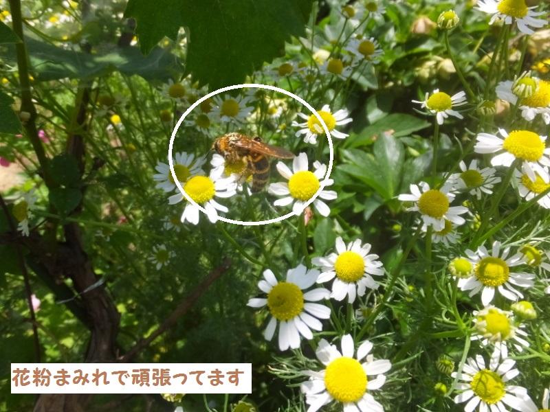 DSCF3444_1_20200525094445779.jpg