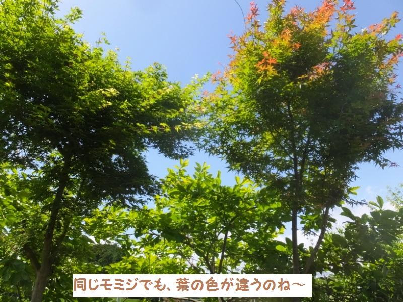 DSCF3458_1_20200525094448ec2.jpg