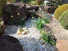 庭の池整理前