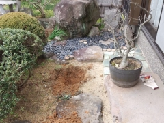 ハナカイドウ植え替え