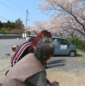 桜94-2