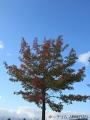 紅葉を撮りに公園へ行く1